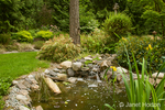 Pond with various water plants and a stream flowing into it via a waterfalls in my backyard, landscaped to attract birds