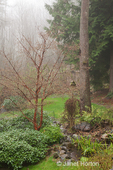 Pacific Northwest backyard on rainy day, with foggy forest behind it, and fish pond in the middle