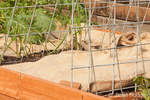 Raised vegetable garden beds prepared for dormancy with burlap bags placed on them