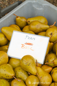 Bin of Bosc pears for sale at a produce stand