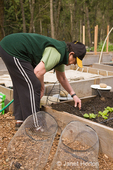 Woman digging in soil to create an area to anchor a potato cage down in it so it won't tip over later, in a raised bed vegetable garden