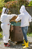 Two women beekeepers lifting the cover off of a Langstroth beehive in preparation for checking the health of the honey and honeybees in the hive