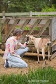 Woman petting alpine mix goat beside a hay feeder
