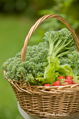 Basket of freshly harvested Blue Wind broccoli, Tom Thumb lettuce and strawberries, sitting on a table in a yard