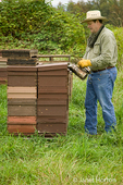 Man using a bee smoker to make them go to the bottom part of the hive and eat honey