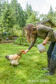 Woman feeding seed to a Buff Brahma hen in a yard