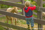 Young boy climbing fence to see a Nubian goat (named Whassup) who is poking his head through the fence