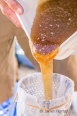 Honey being poured froma large food-grade bucket into a stainless steel honey strainer