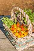 Basket of freshly havested organic produce, including red cherry tomatoes, yellow (Gold Nugget) cherry tomatoes, green pole beans, Dragon Tongue beans, and YaYa carrots, resting on a picnic table