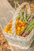 Basket of freshly havested organic produce, including red cherry tomatoes, yellow (Gold Nugget) cherry tomatoes, green pole beans, Dragon Tongue beans, and YaYa carrots