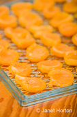 Tray of raw apricot halves ready to have Ascorbic acid put on them to prevent them turning brown, and then put into a dehydrator