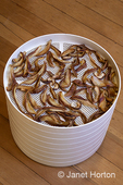 Dried Bosc pear slices in a food air dehydrator
