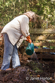 Woman pouring water onto a compost pile until it has the moisture content of a damp sponge