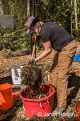 """Man mixing with a compost fork an equal mix of """"greens"""" and """"browns"""", with enough water to resemble a damp sponge, in a compost bucket."""