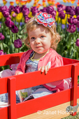 Toddler girl in wagon in tulip garden