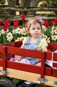 Pouting toddler girl in wagon in tulip garden