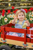 Toddler girl requesting her bottle of water by reaching, in a wagon in tulip garden