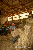 Men pitching and stacking bales of aromatic hay in the barn