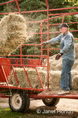 Man pitching bales of hay out of a hay wagon, to be moved into the barn