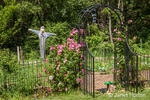 Trellis covered with climbing pink roses, leading into a garden with a scarecrow