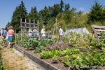People touring the Issaquah Highlands Community Garden