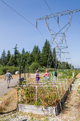 Electric power lines over the Issaquah Highlands Community Garden