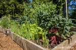 Raised bed vegetable garden with onions, lettuce, kale and sugar snap peas