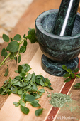 Fresh and dried oregano with a mortar and pestle to crush the dried leaves
