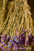 Batches of hanging lavender
