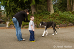 Six month old Great Dane puppy, Athena, responding to a