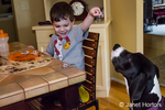 Three year old boy tempting his six month old Great Dane puppy, Athena, with table scraps, causing her to beg