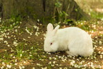 Bunny enjoying free ranging on spring grass at Fox Hollow Farm