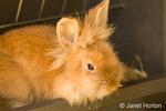 Soft, furry bunny sitting in its feeder at Fox Hollow Farm