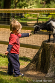Boy feeding a Nigerian Pygmy goat kid at Fox Hollow Farm