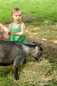 Even Nigerian Pygmy goats can be scary to a toddler girl at Fox Hollow Farm