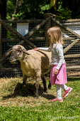 Young girl petting a sheep at Fox Hollow Farm