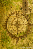 Carving of a compass on a moss-covered tree