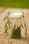 Jar of freshly dried and fresh tarragon on a picnic table