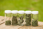 Jars of freshly dried herbs (french thyme, rosemary, sage, oregano, french tarragon) on a picnic table