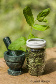 Jar of freshly dried and fresh Mojito Mint, along with a mortar and pestle, on a picnic table