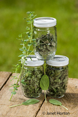Jars of home-dried sage, oregano and Mojito Mint, along with fresh oregano and Mojito mint leaves on a picnic table