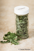 Homemade dried oregano