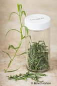 Jar of fresh and newly dried tarragon