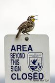 Western Meadowlark on a wildlife refuge sign