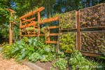 Vertical vegetable and flower garden with a wood trellis