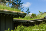 Green roof on the Cedar River Watershed Education Center
