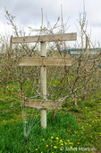 L-shaped crossarm trellis for use in supporting young apple trees