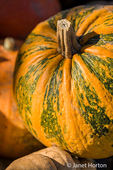 Musque de Provence Pumpkin is a French heirloom cheese variety also known as Fairytale.
