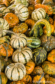 A variety of small pumpkins and ornamental gourds for sale at Draper Girls Country Farm