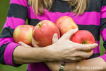 Woman holding freshly picked Honeycrisp apples at Draper Girls Country Farm